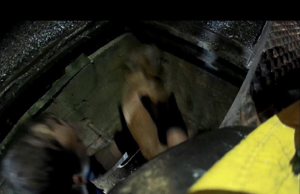Dog Trapped in Storm Drain